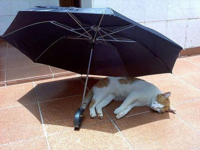 для военного очень жарко в квартире чем помочь коту семинаров МК, ноябрь-декабрь
